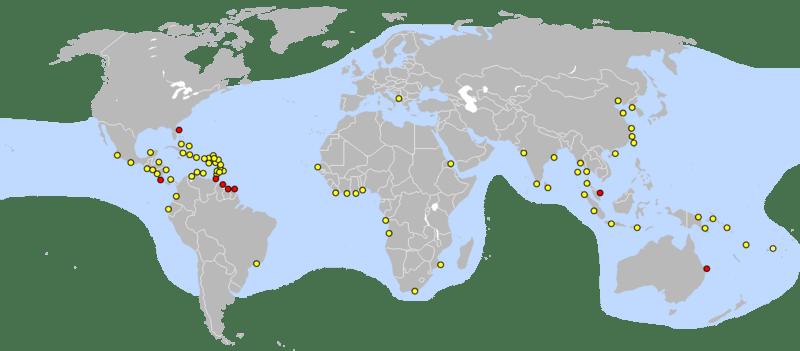 hawksbill-distribution